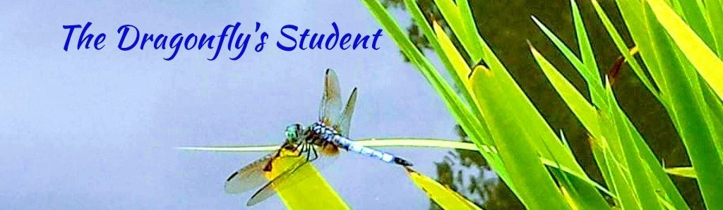 The Dragonfly's Student